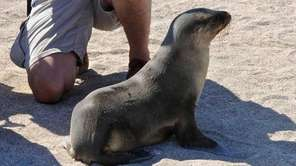 A tourist observing a Galapagagos sea lion at
