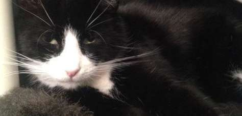Liam, a tuxedo cat, and other felines rescued
