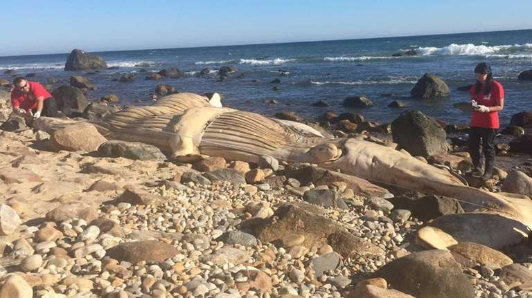 The Riverhead Foundation for Marine Research and Preservation