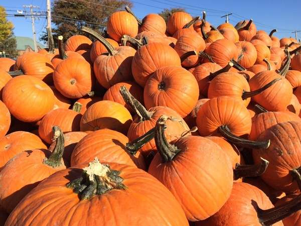 Pumpkins are piled up at Hank's Pumpkintown in