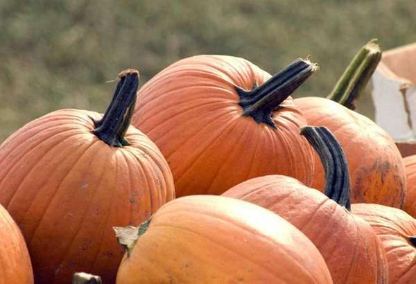 Free pumpkins will be available at the Moriches