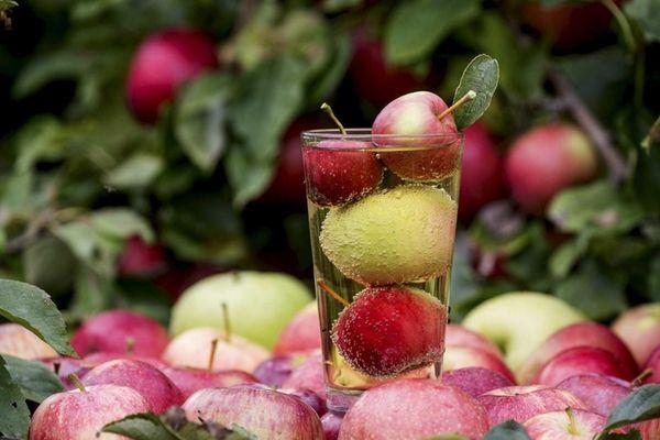 Woodside Orchards hard cider tasting barn in Aquebogue