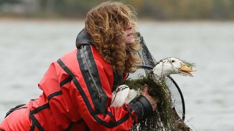 Animal rescuer Patricia Amendolia of Kings Park reaches