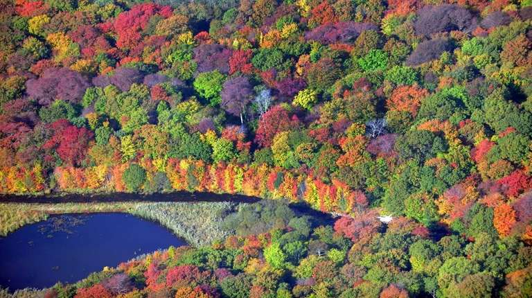 Massapequa Preserve's magnificent fall foliage is pictured in
