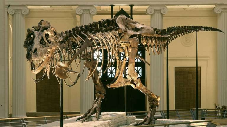 Unveiled in 2000, SUE, the 67-million-year-old Tyrannosaurus rex