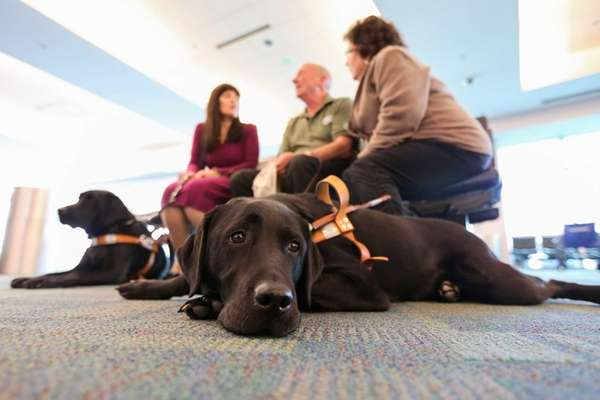 Blue, a guide dog owned by Peter Coughlin