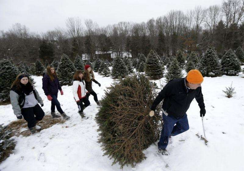 Visit Santa at the Shamrock Christmas Tree Farm