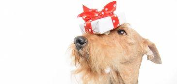 dog gift crop