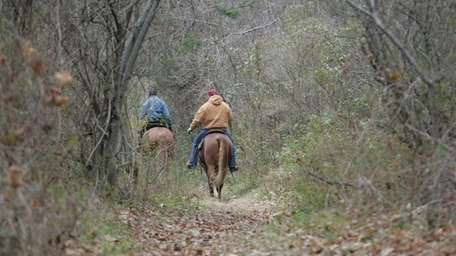 Horseback riders ride the trails at the Muttontown