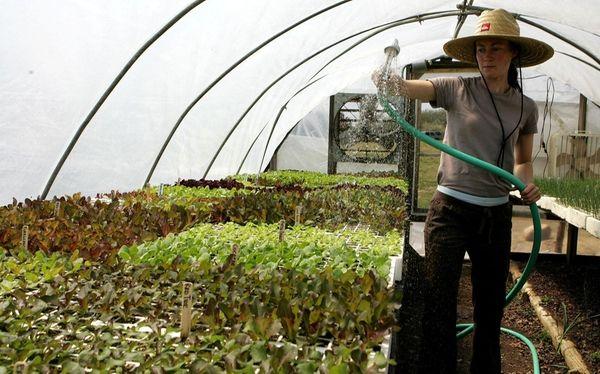 Katie Baldwin, an apprentice at organic Quail Hill