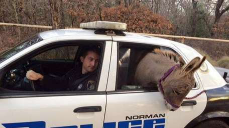 In this photo provided by the Norman, Okla.,