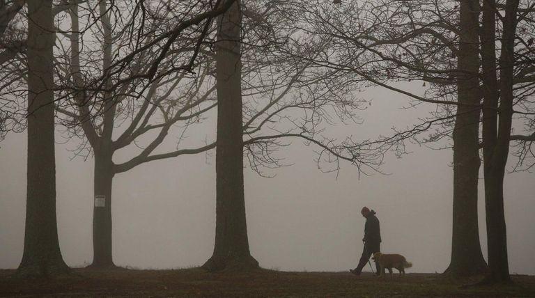 A man walks his dog through dense