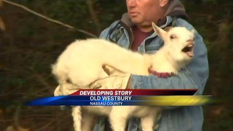 A screen shot from News 12 Long Island