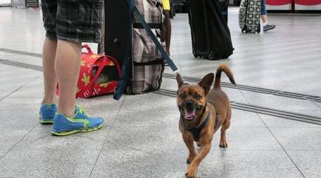 Plan ahead when traveling with your dog.