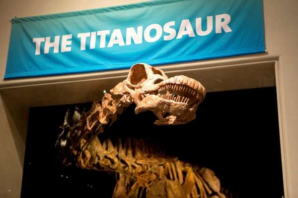 A 122-foot-long Titanosaur cast reveals itself in the