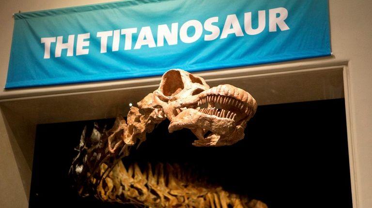 A 122-foot-long Titanosaur cast reveals itself in the