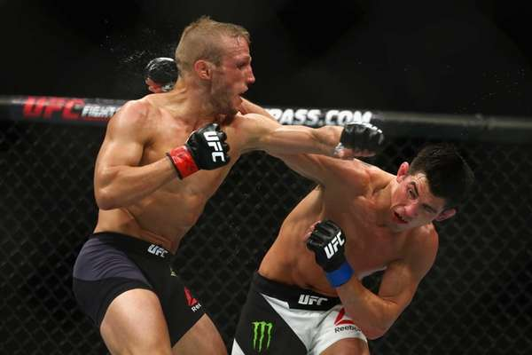 T.J. Dillashaw, left, fights Dominick Cruz in their