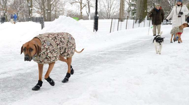 This dog was dressed for winter success in
