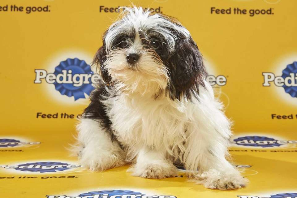 Andy Cohen (Team Fluff) is a female 16-week-old