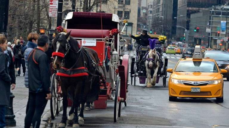 Horses and their carriage operators line up