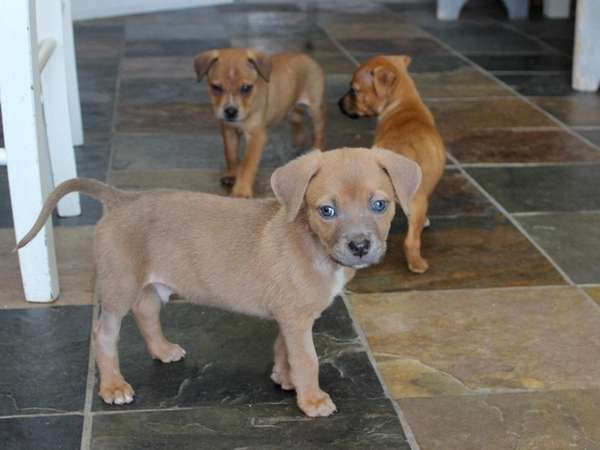 Jeter Dutch, a.k.a. Coney Dutch, with his siblings