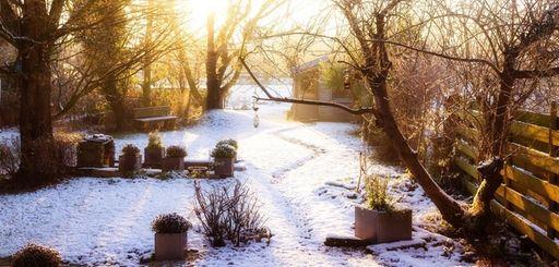 A garden in winter in early morning.