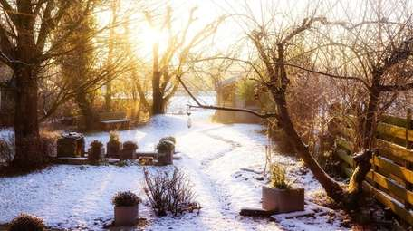 A garden in winter in early morning.
