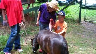 A camper learns to groom a miniature pony