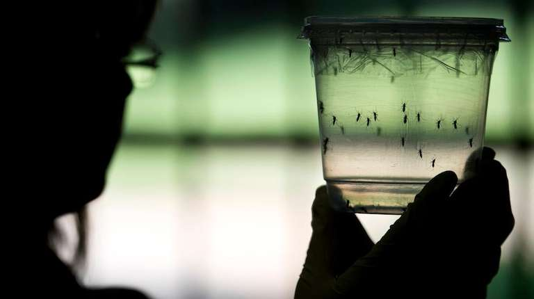 The Zika virus is spread through Aedes mosquitoes.
