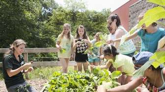 Campers learn about gardening at the Usdan camp.