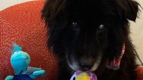 Prince, a 14-year-old chow mix who briefly appears