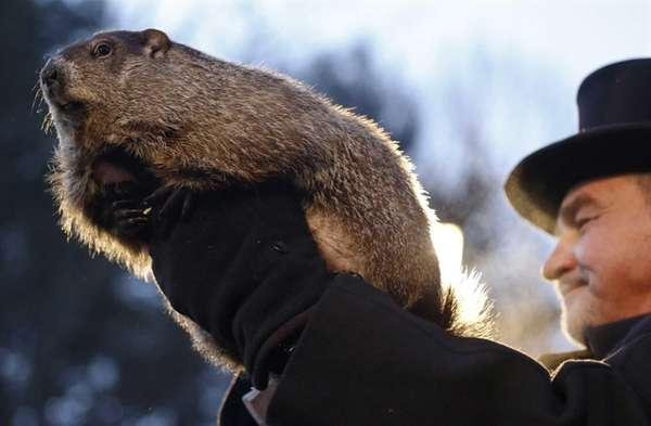 Groundhog Club co-handler John Griffiths holds Punxsutawney Phil
