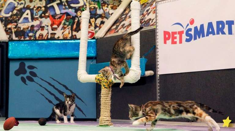 Kittens are photographed on the set during a
