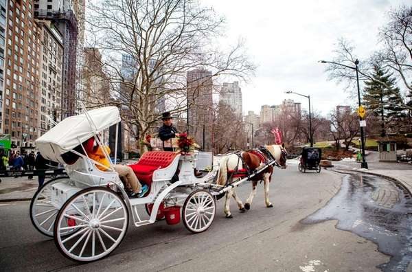 A carriage horse enters Central Park at 59th