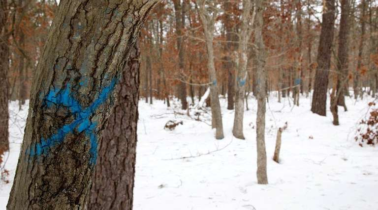 A blue mark on a tree indicates that