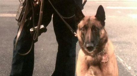NYPD Officer John O'Connor rescued his partner, Wyatt,