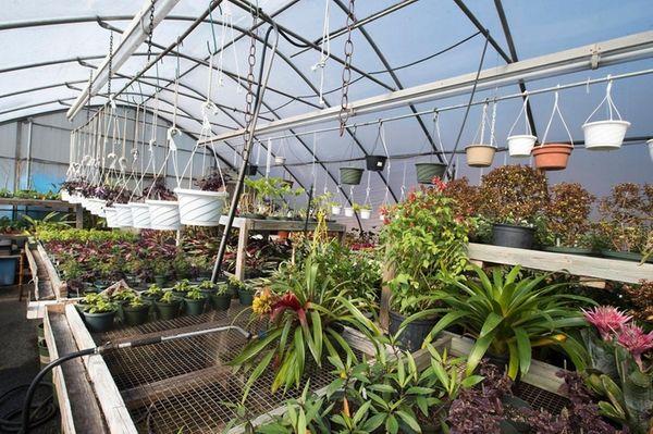 Flowers in the greenhouse in Clark Botanic Garden