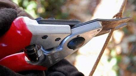 Hand-held pruners work well for cutting thin branches.