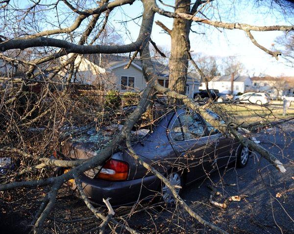 A tree fell on a car on Elmwood