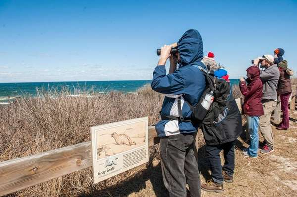Participants in a seal walk look at a