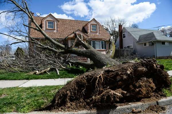 A fallen tree in front of the home