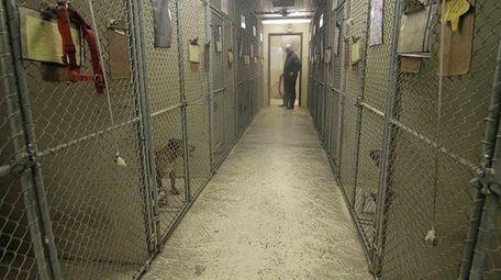 Chris Elton, director of the Babylon Animal Shelter,