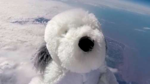 Sam the toy dog, attached to a helium