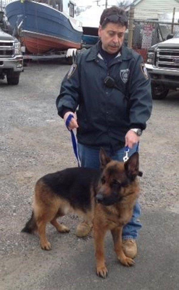 The Suffolk County SPCA is seeking the public's