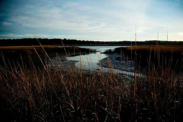 The wetlands in Nissequogue, around the Nissequogue River,