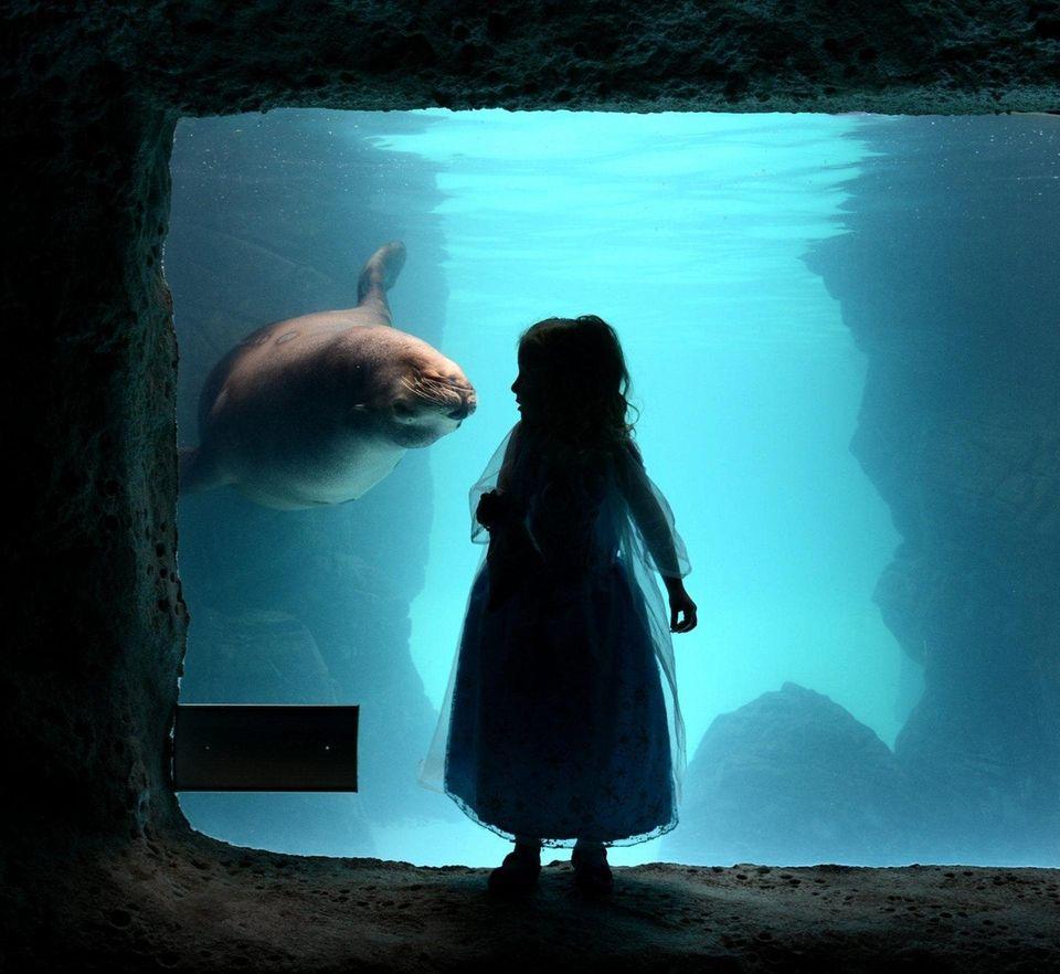 Head to the Long Island Aquarium in Riverhead