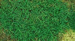 Instead of using herbicides, crabgrass is best removed