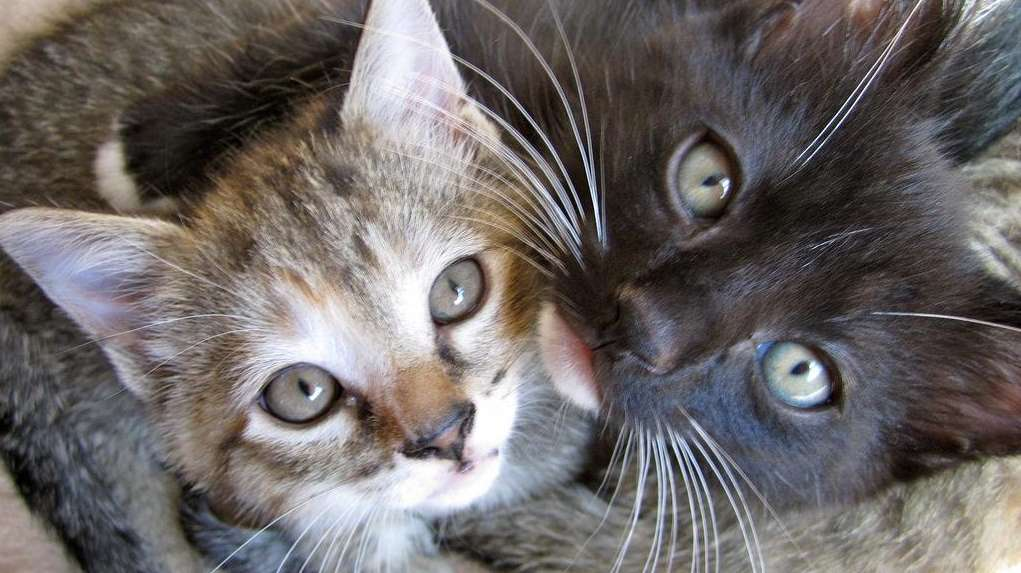 Most popular cat names for 2015 were similar