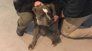 The Suffolk County SPCA said it rescued this