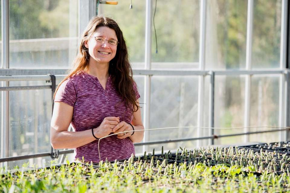 Executive director and founder, Long Island Native Plant